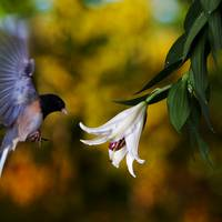 Junco and Lilly