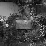 """Rose Garden 2"" by guarabamba"
