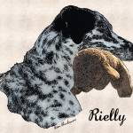 """Rielly"" by diane"