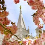 """salt lake city temple in the spring"" by danielvineyard"