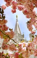 salt lake city temple in the spring