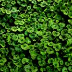 """green"" by dudupattel"