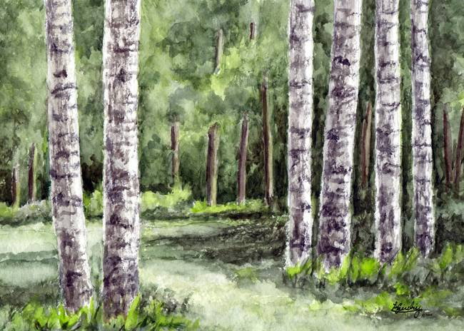 Landscaping With Paper Birch Trees : Birch tree watercolor landscape by pixel paint studio