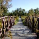 """""""Walking bridge"""" by newtstew"""
