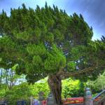 """""""[HDR] Tree 1"""" by thirdlensopen"""