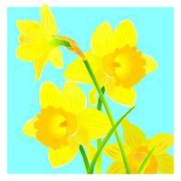Daffodils with summer blue sky
