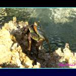 """""""Gorgeous Crab"""" by wael_elshiekh"""