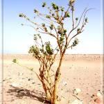 """Desert alone !!!"" by wael_elshiekh"