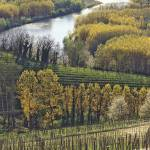 """RiverVineyards"" by JohnAnthonyRizzo"