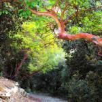 """ArtCyprus Troodos Strawberry Tree"" by artcyprus"