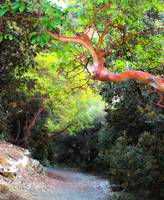 ArtCyprus Troodos Strawberry Tree
