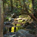 """Artcyprus 09 Troodos reflections Caledonia Falls"" by artcyprus"