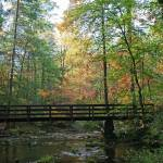 """Forrest Bridge"" by jones3006"