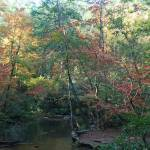 """""""Creek in the Fall"""" by jones3006"""