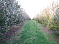 Fall Apple Grove