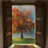 Wooden Window and the Tree