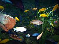 Tropical Fish 5