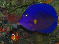 Tropical Fish 9