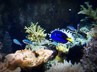 Tropical Fish 10