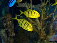 Tropical Fish 11
