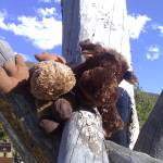 """""""Fence Post"""" by milehighwonder"""
