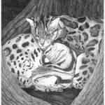 """""""Cuddling"""" by StephanieP"""