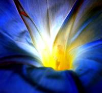 Blue Flower Abstract