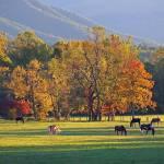 """""""Autumn Horse"""