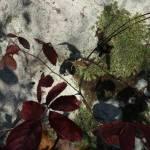 """""""Lichen Likeness"""" by JoJarvis"""