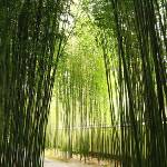 """Bamboo Trail"" by lorrainesphotos"