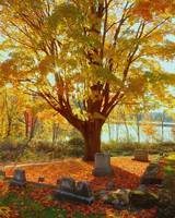 A Cemetery In Fall
