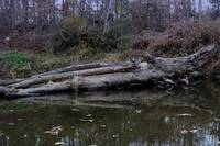 Logs along the river
