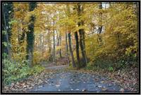 Golden Fall Lane