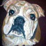 """""English Bulldog"""" by Kellydyer"