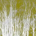 """Forest"" by jessicabartenhagen"