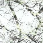 """Nest"" by jessicabartenhagen"