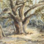 """McBean Parkway Oak"" by denisebrownart"