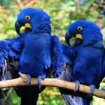 """Macaws"" by emolee84"