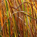 """Autumn Reeds Number 5"" by EarthSmiles"