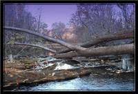 Fallen Timber on the river