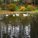 """""""Duck Pond Reflections"""" by ArianasArt"""