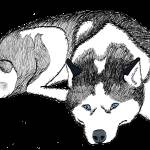 """Siberian Husky"" by malibuitalian"