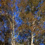 """""""Autumn tree No 1"""" by snapshotsbysandy"""
