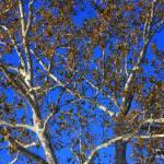 """""""Autumn tree No 2"""" by snapshotsbysandy"""