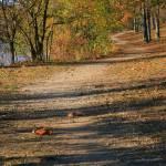 """""""Winding trail"""" by snapshotsbysandy"""