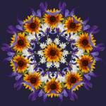 """""""Iris Desert Daisy 2"""" by libelle"""