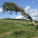 """The Bending Tree on Omaha Beach in Normandy"" by Groecar"