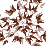 """Red Leaf Mandala"" by libelle"