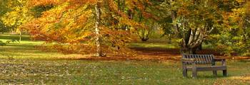 Panorama Autumn Bench
