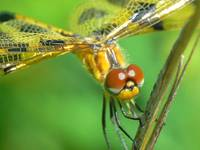 Up-close and Personal Wth a Dragonfly